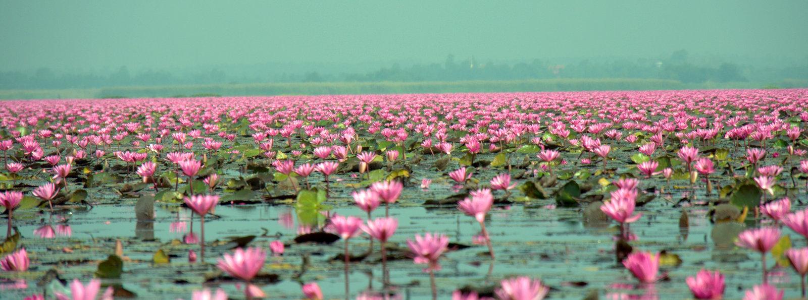 Lotus Lake Boat Trip Nong Han Kumphawapi