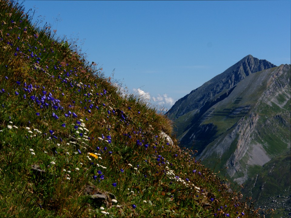 Banks of alpine flowers beside the path