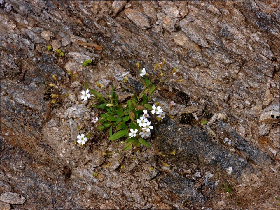 And start to find some alpine flowers as we get higher