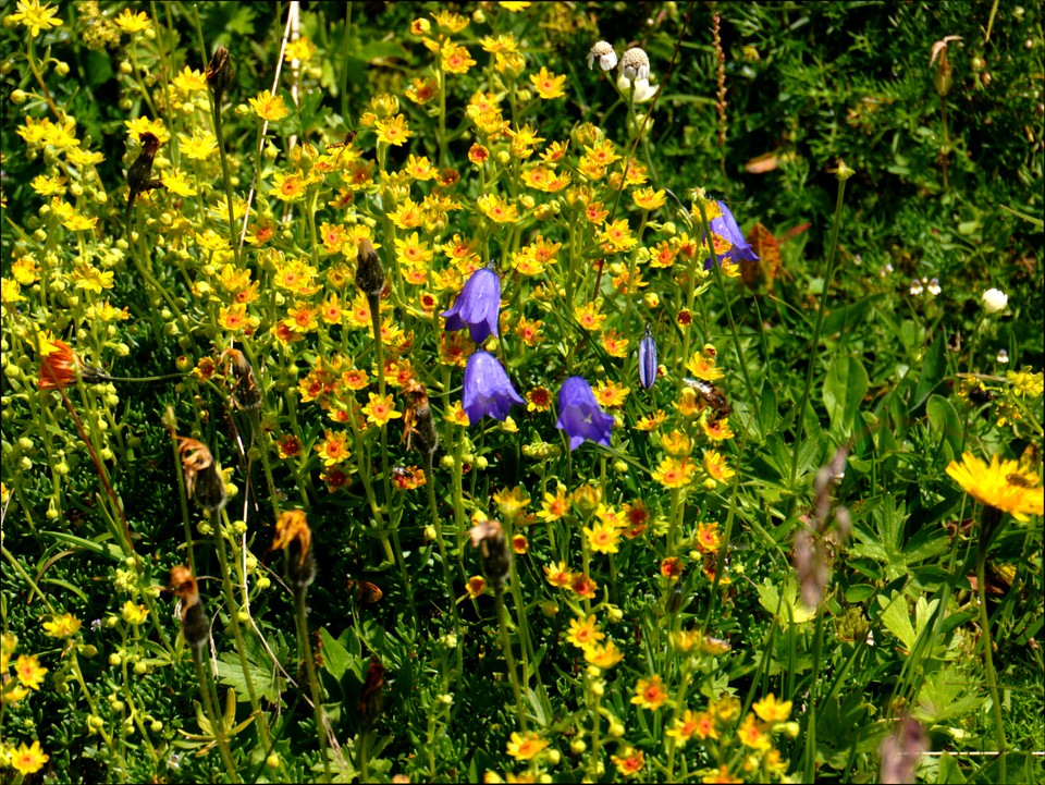 The alpine meadows here are on limestone, and particularly rich in flowers and butterflies