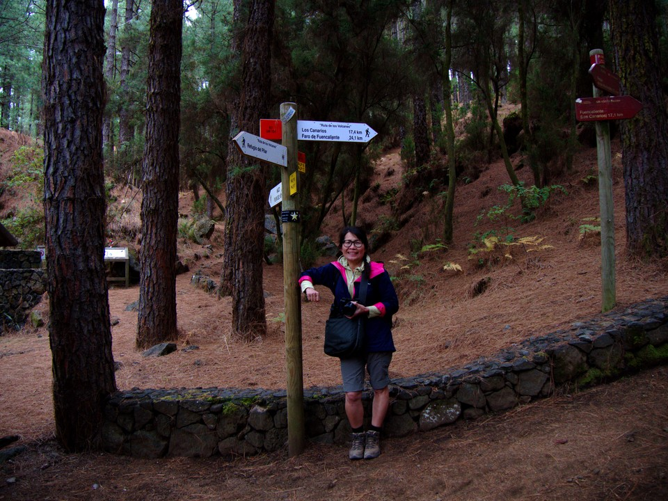 El Pilar is in tall pine forest