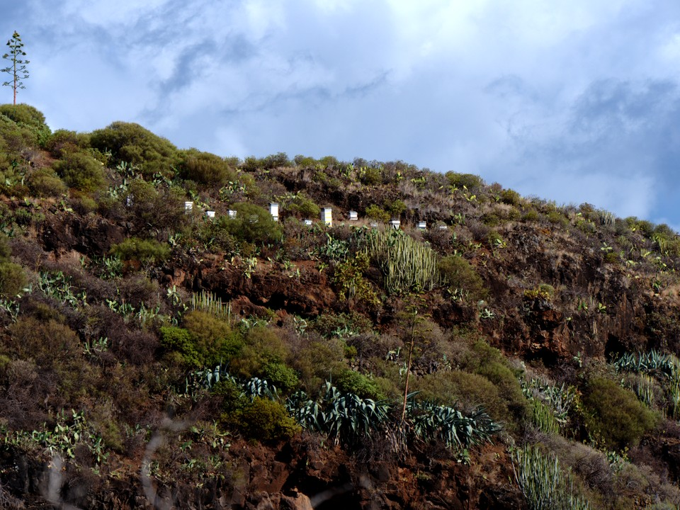 Bee hives on the hillside