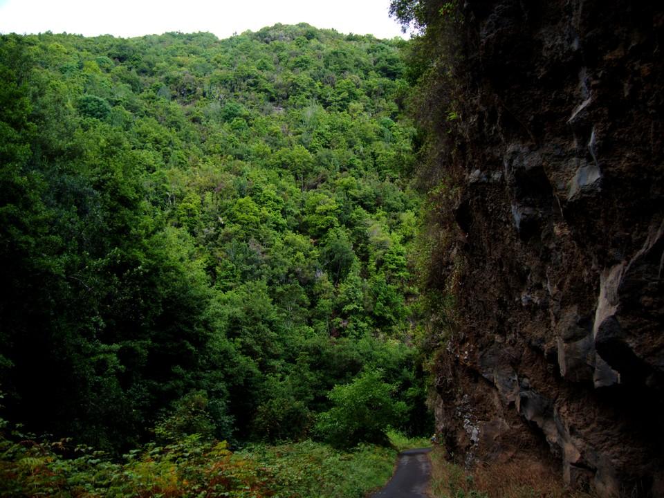 Now head up the track up the Baarranco de la Galga. A wooded gorge