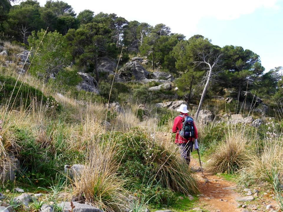 The path runs through open woodland along the cliff tops