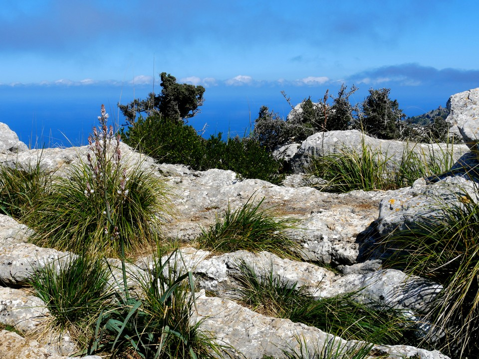 From the top of puig de Balix return past the cave and look for the path heading south and then west. Pas d'en Barona