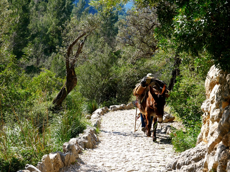 Traditional donkey transport