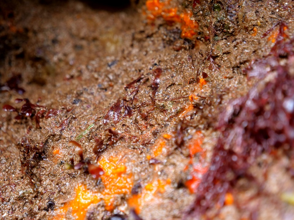 Rocks encrusted with sponges