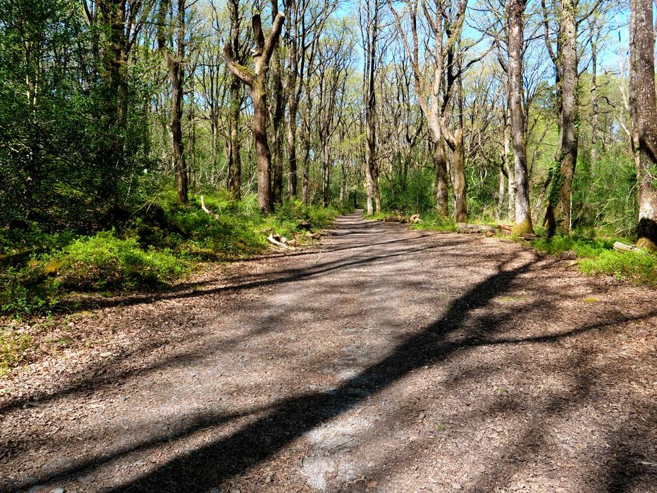 Walking up through Yarner Wood Nature Reserve
