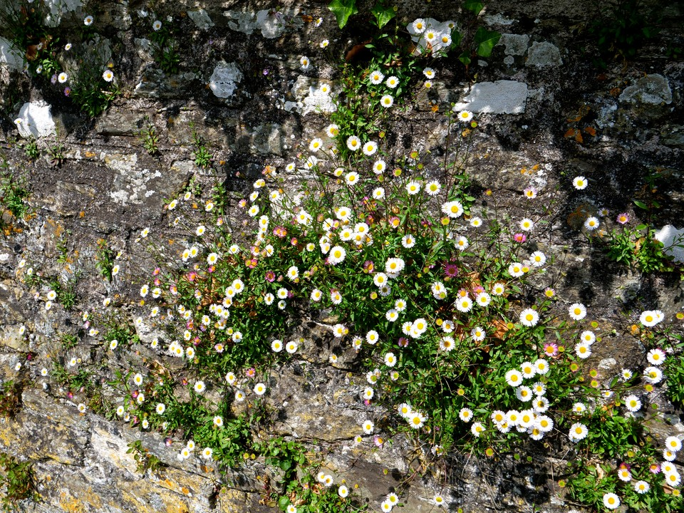 Walls covered in flowers