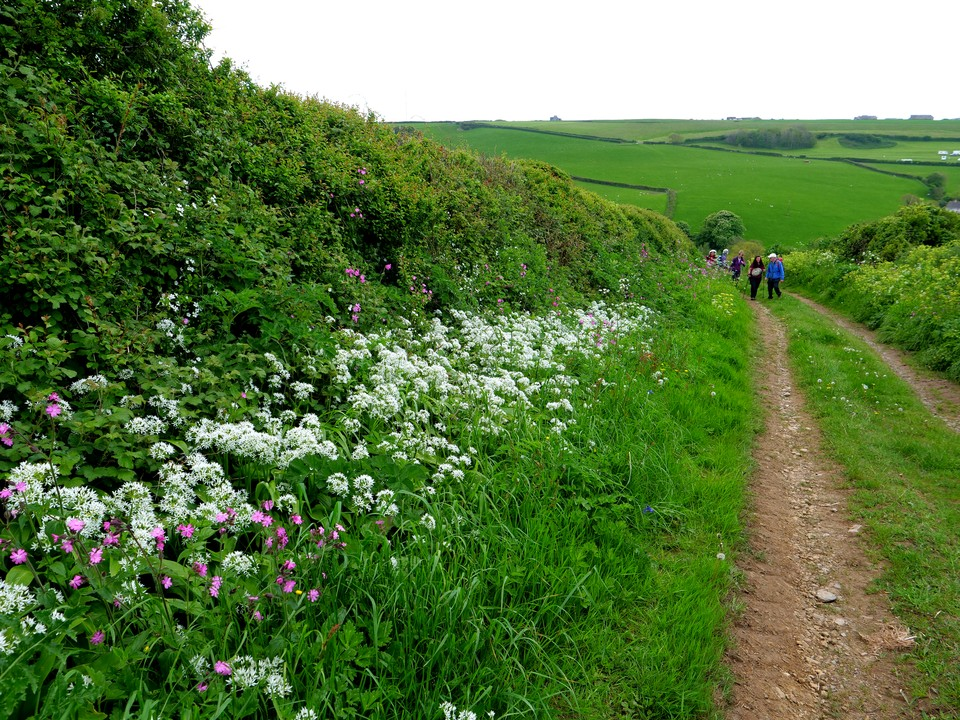 Further up the hill, big patches of wild Garlic