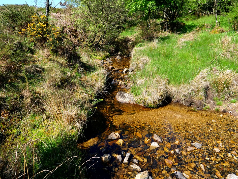 A crystal clear side stream flowing into Emsworthy mire