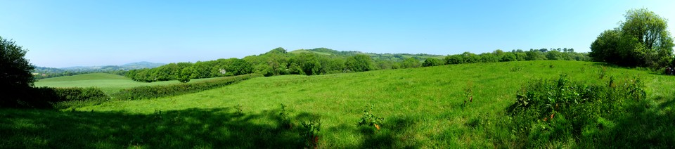 Dorset Panorama: Looking over Beaminster towards Lewesdon Hill, and towards the right Beaminster Down