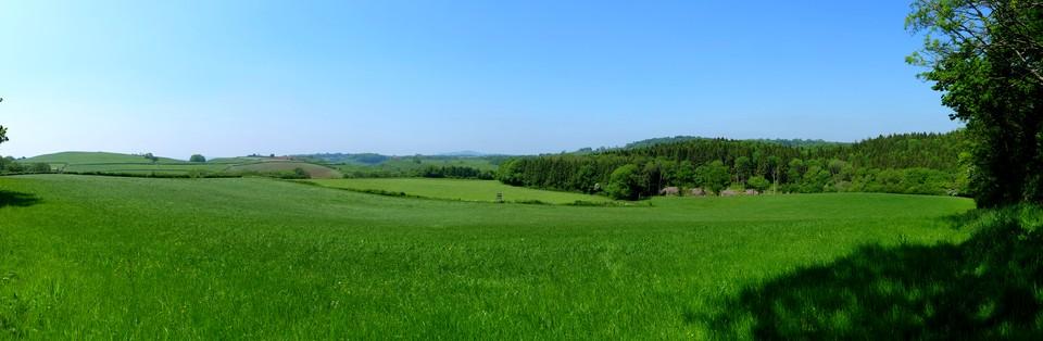 Dorset panorama, on the edge of Hooke Park