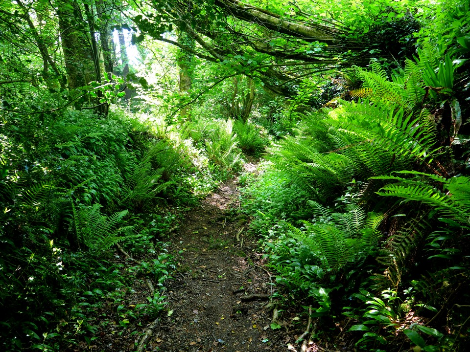 Ferns lining a sunken path