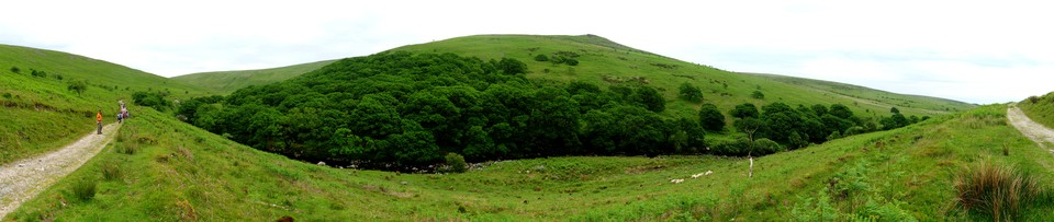 Dartmoor Panorama: Piles Copse, ancient woodland. Sharp Tor beyond.