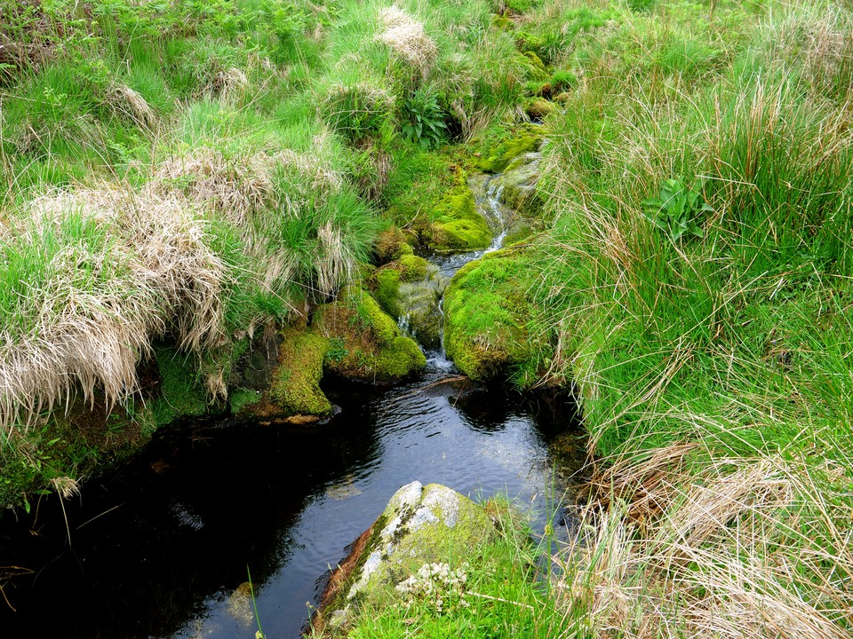 Mossy stream below Downing's House, a tinner's hut.