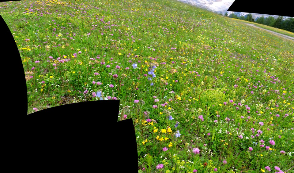 Alpine flower meadows
