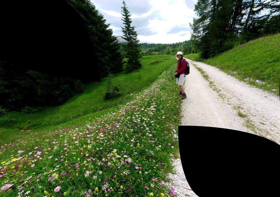 Flowers beside path 22