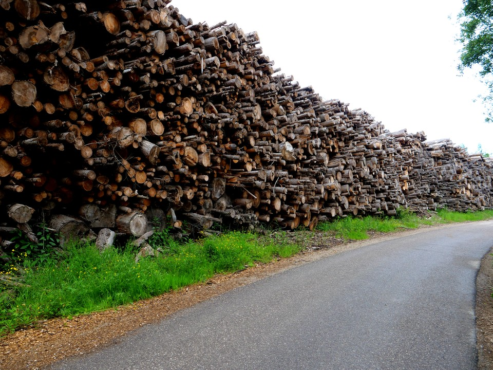 A massive stack of logs for firewood