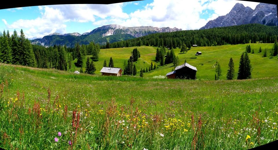Armentara alpine flower meadows