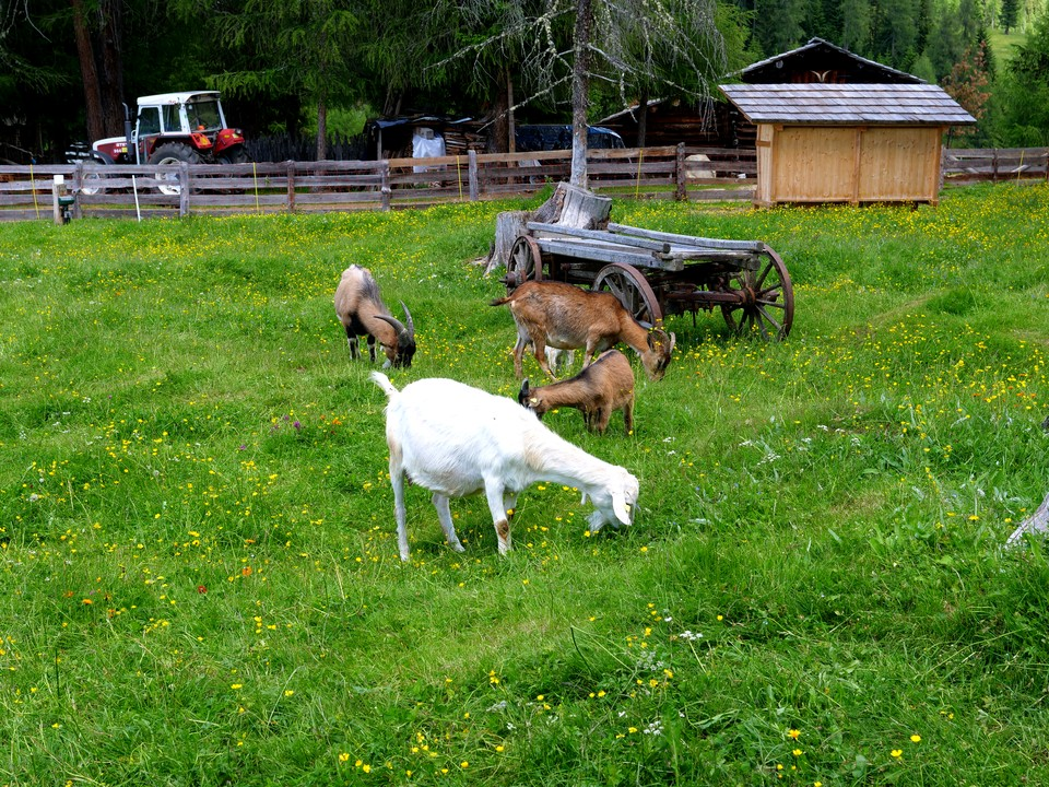 Ranch da Andre