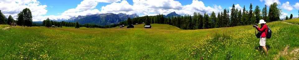 Panorama of Alpine flower meadows