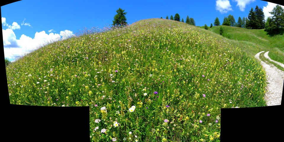 Panorama of flower meadows