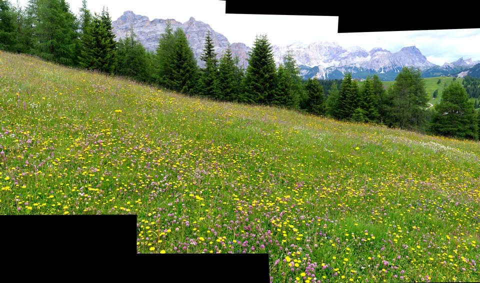 Alpine flower meadows at Piz la Illa