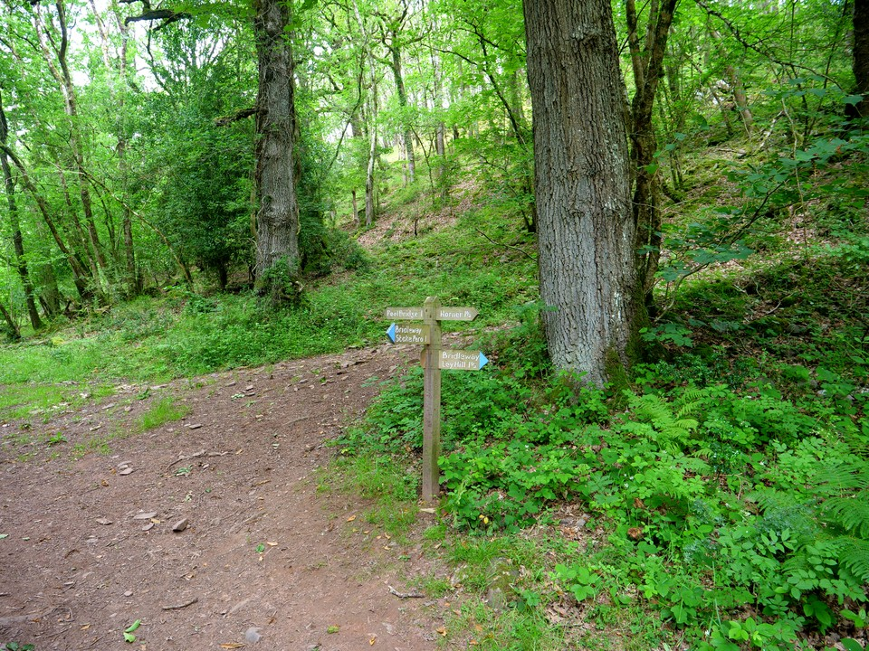 Down through Stoke Wood, then up through Horner Wood. Turn right on emerging at the top of the wood to head over Ley Hill, and then descending into Porlock. Returning to West Porlock on the Coleridge Way