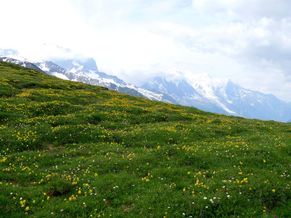 Flower meadows at the Col de Balme