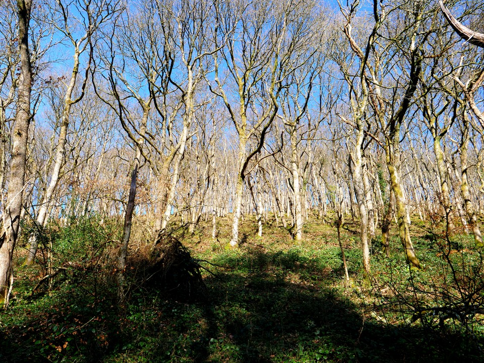 Teign woodlands in the sunshine