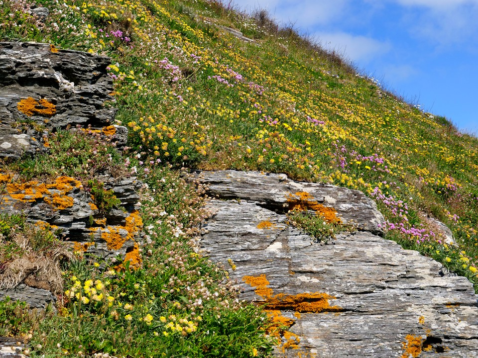 Carpets of spring flowers on the steep slopes