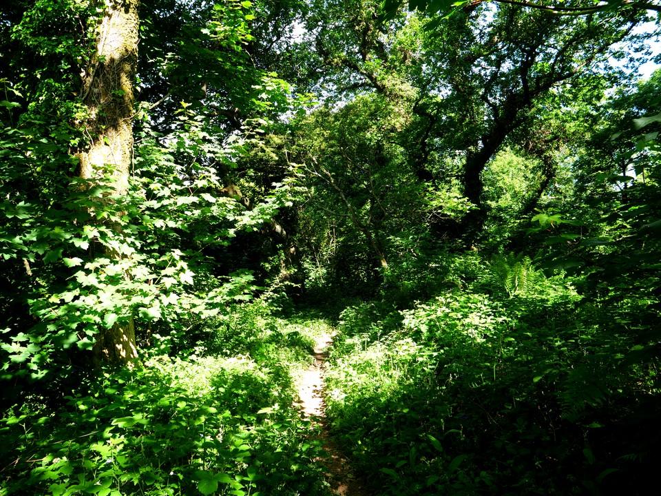 Old trees in Furzedown Wood