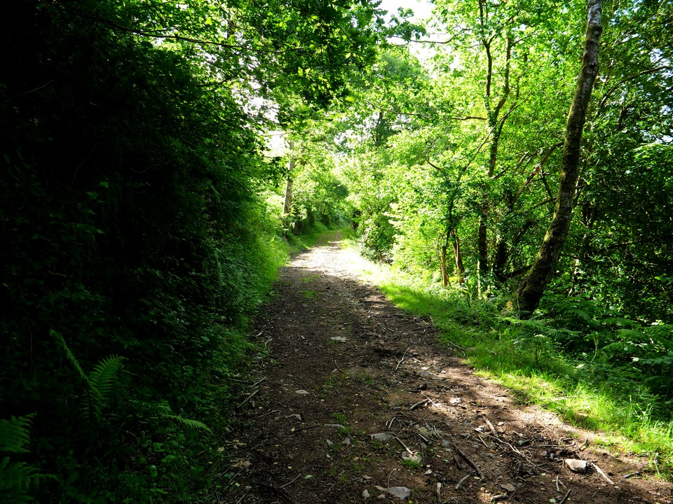Climbing through the woodland