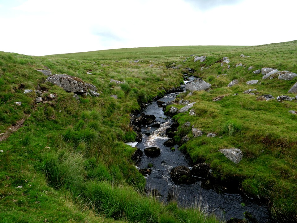 When the left bank of Brim Brook becomes flat and boggy there is a clear path heading away from the stream, due North. Shortly after leaving the brook the path splits, take the right fork for Dinger Tor
