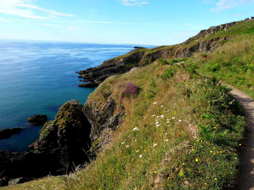 Many flowers on the cliffs