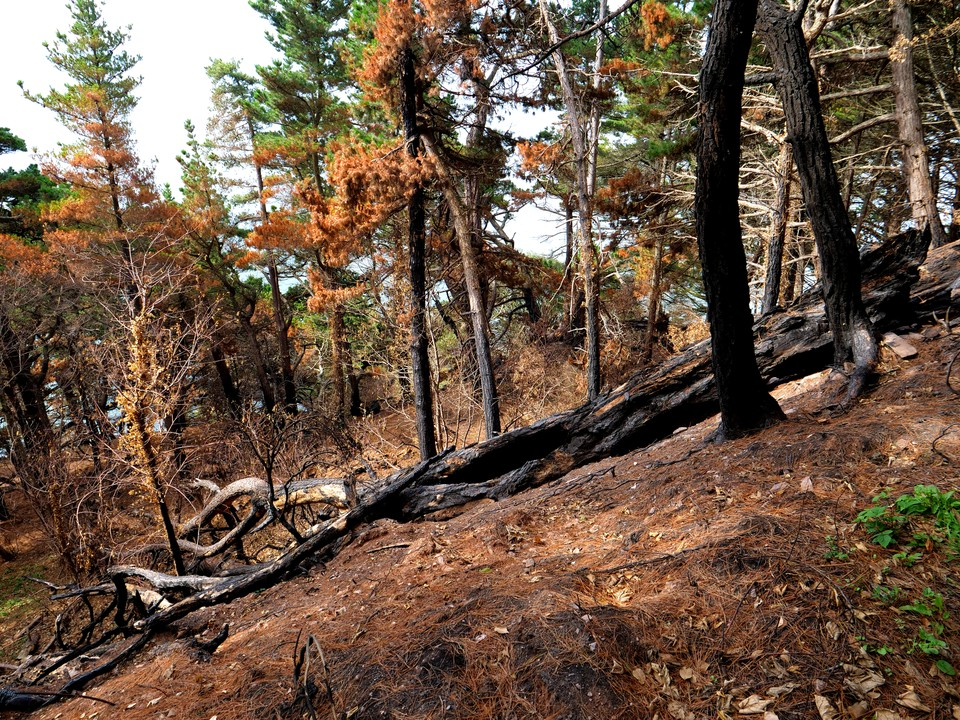 A fire has recently swept up from Newfoundland Cove. A barbecue on the beach ?