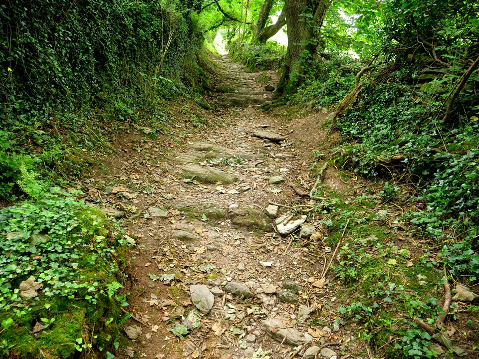 The sunken lane from Home Farm up to Higher Brownstone. Very slippery in winter but dry today.