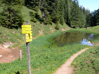 2009-06-18-10-09-04_p1060481_niederau-oberau-austria-walking-flowers-schatzbergalm-thalerkogel-hosljoch-gratlspitz-thierbach-muhltal.jpg  Walking from Niederau in Austria Schatzbergalm Thalerkogel Hosljoch Gratlspitz Thierbach Muhltal. Pictures of alpine flowers and butterflies. GPS track