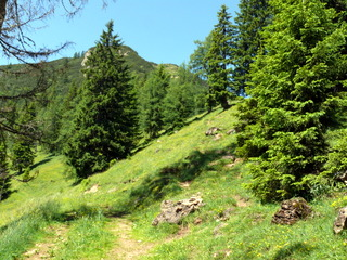 2009-06-18-10-38-02_p1060492_niederau-oberau-austria-walking-flowers-schatzbergalm-thalerkogel-hosljoch-gratlspitz-thierbach-muhltal.jpg  Walking from Niederau in Austria Schatzbergalm Thalerkogel Hosljoch Gratlspitz Thierbach Muhltal. Pictures of alpine flowers and butterflies. GPS track