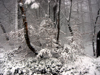 2013-01-23-14-58-05_p1090824_2013-01-23-snow-on-mamhead-haldon.jpg  This is one of my favourite photographs of the day, with the colours of the tree trunks contrasting with the snow.A winter wonderland as snow outlines every branch in the forest