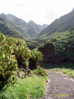 tenerife-nov-2003-155.jpg  Walking the Anaga Mountains of Tenerife.