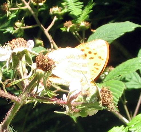 rosemoor_July_2006 rosemoor_July_2006