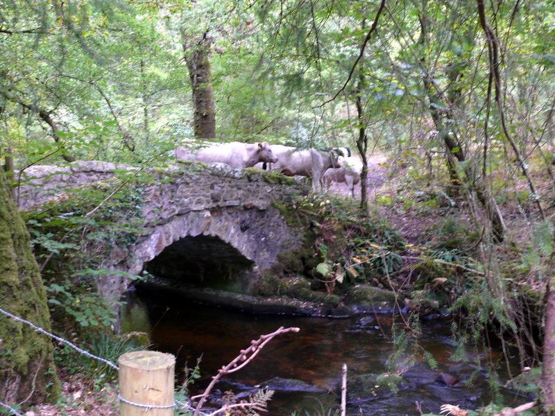 bovey bridges bovey bridges