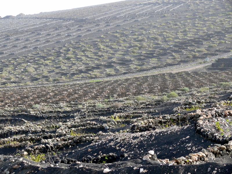 Lanzarote Montana Cuervo walk Lanzarote Montana Cuervo walk