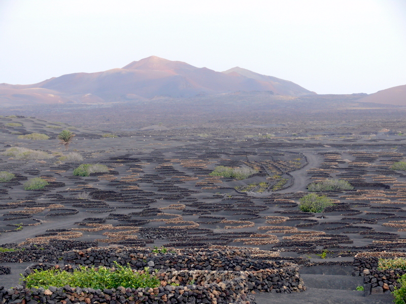 Lanzarote La Geria Lanzarote La Geria