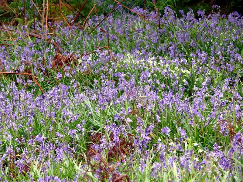 Hay tor Black Hill Bonehill Top Tor Saddle Tor Hay tor Black Hill Bonehill Top Tor Saddle Tor