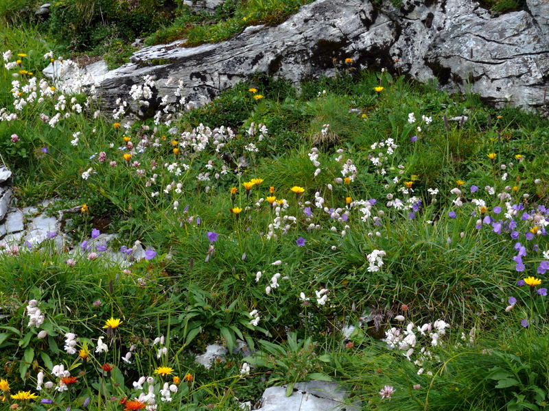 Ramsau in Zillertal Gerlossteinalm Torhelm Brandberger Kar Brandberg Ramsau in Zillertal Gerlossteinalm Torhelm Brandberger Kar Brandberg