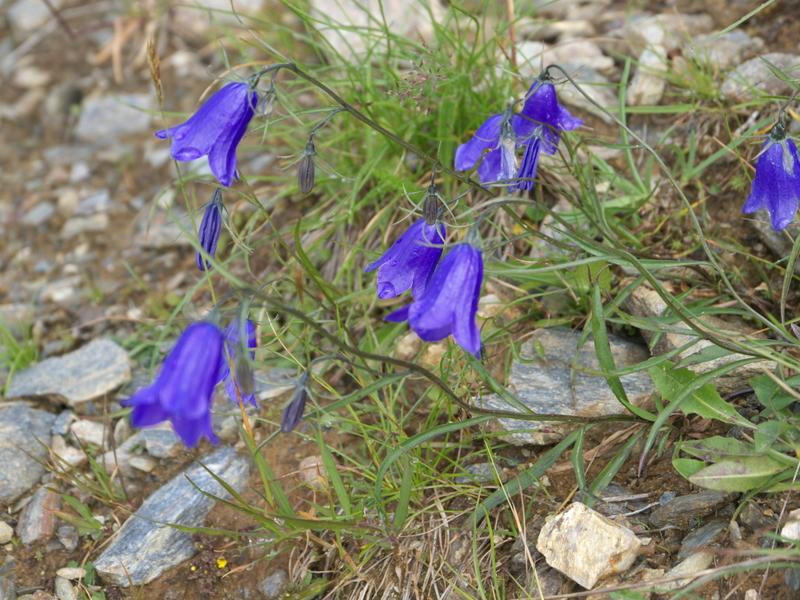 Austria Mayrhofen Penken Wangalm Lammerbichalm Schrofenalm Finkenberg  Austria Mayrhofen Penken Wangalm Lammerbichalm Schrofenalm Finkenberg