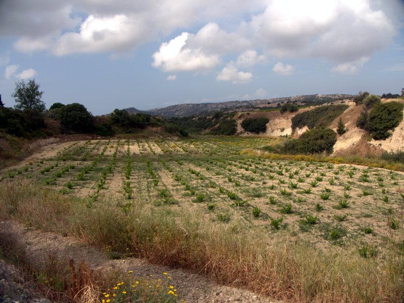Vineyards Alekhtora to Khapotami Gorge, Walking Cyprus.  Alekhtora Khapotami Gorge Kato Arkhimandrita 2010-04-30